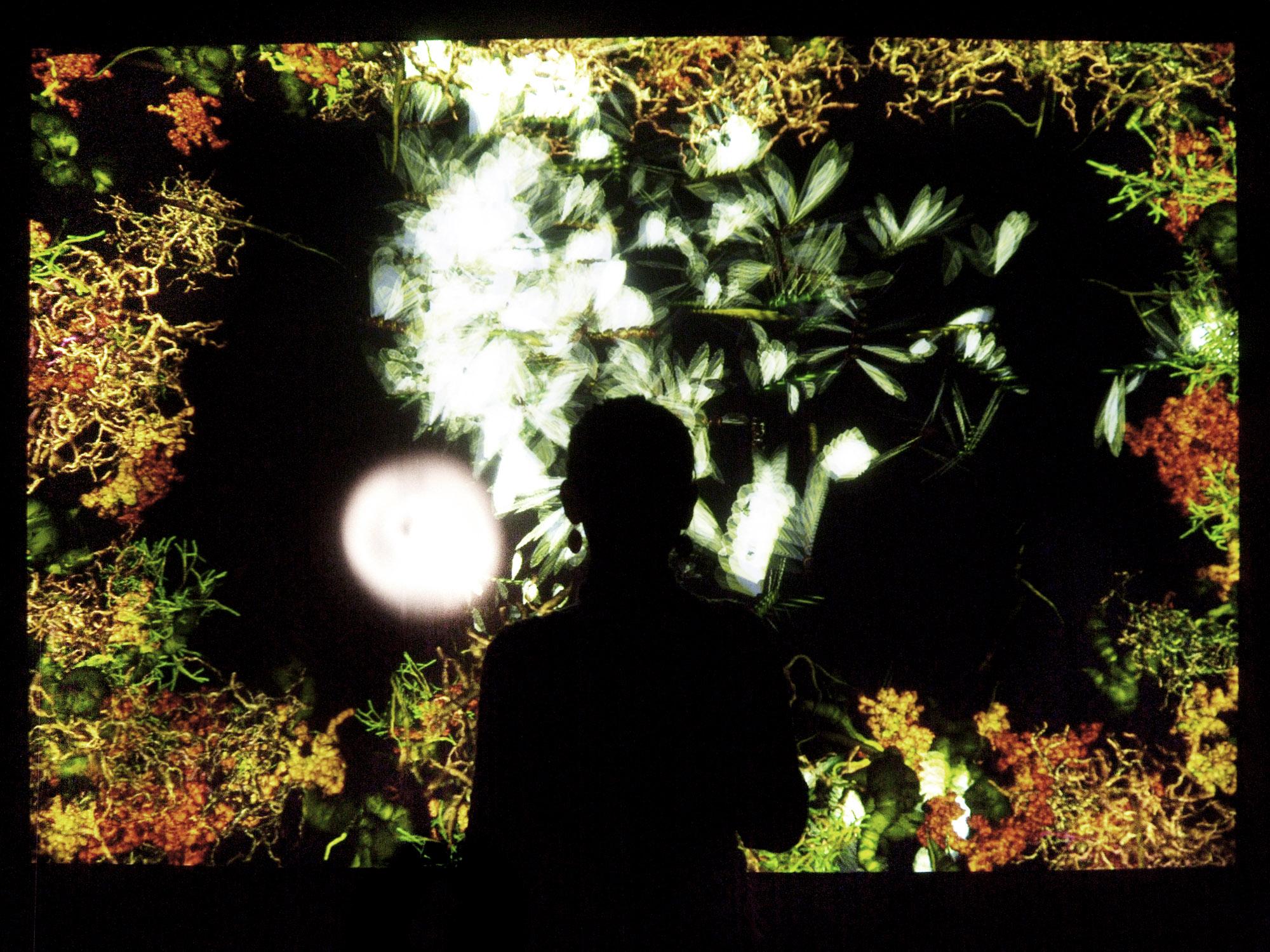Phototropy - Christa Sommerer e Laurent Mignonneau