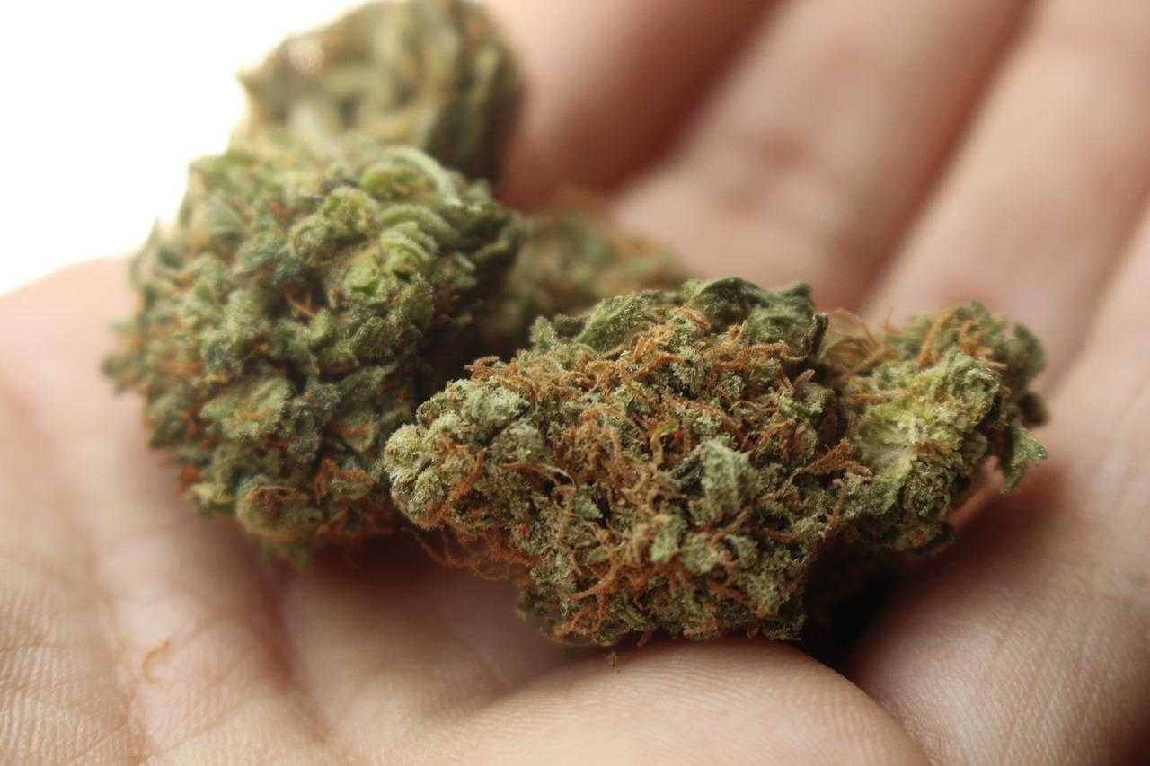 cannabis ciência