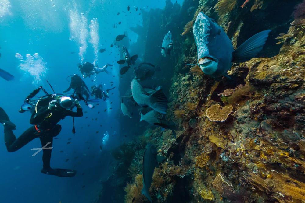 maravilhas subaquáticas