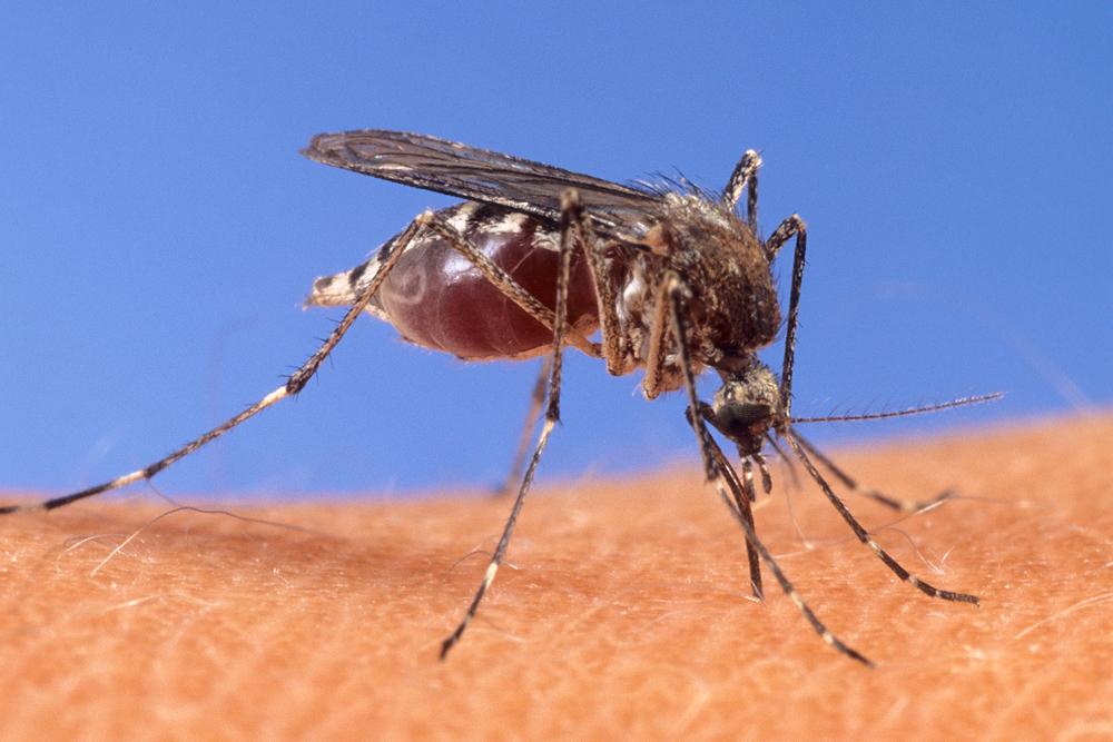 acabar com a dengue