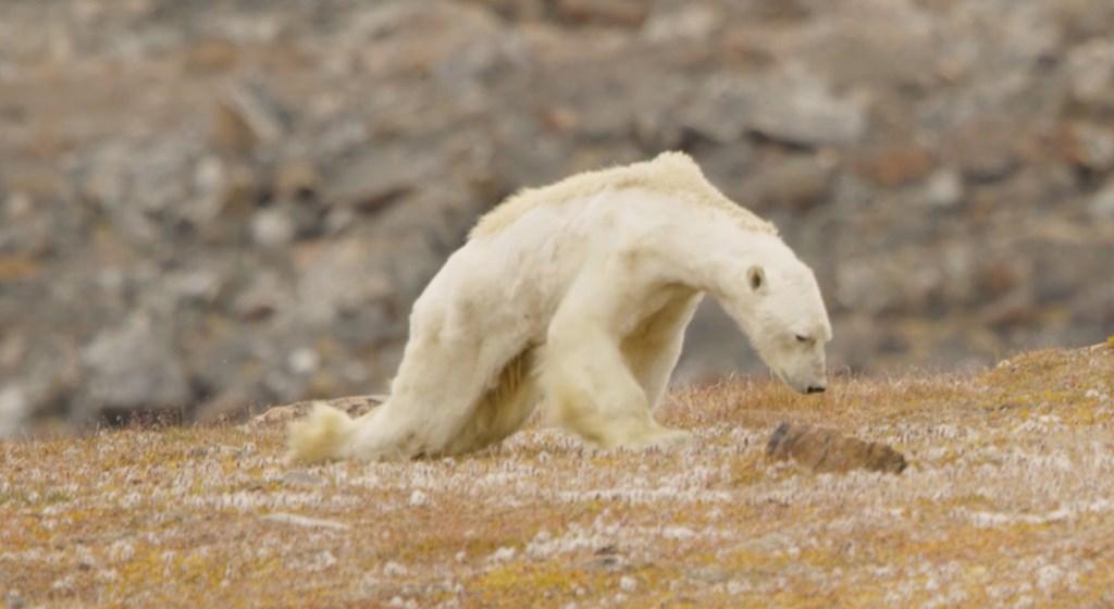 O vídeo que te vai gelar o coração e abrir os olhos para o aquecimento  global