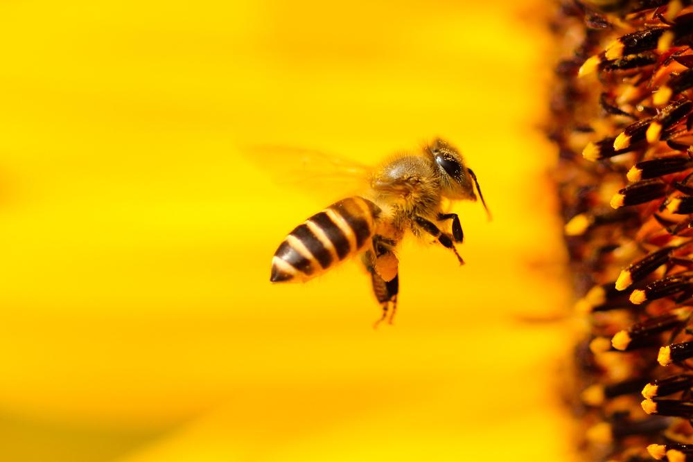 dia-mundial-da-abelha