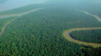 floresta da Amazónia