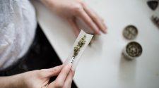 canábis proposta legalização Portugal